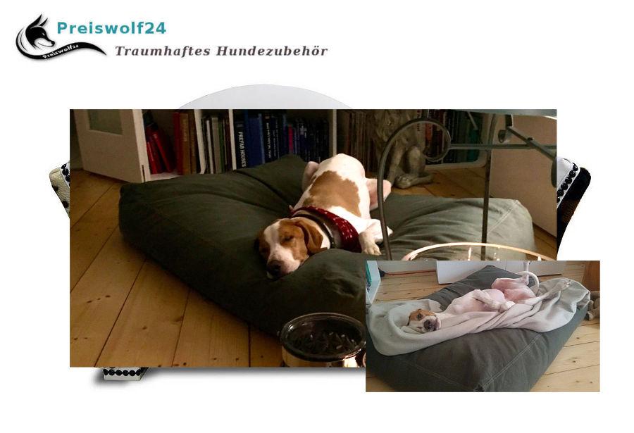 Moleskin Deluxe Hundekissen Hundebett orthopädisch strapazierfähig grau