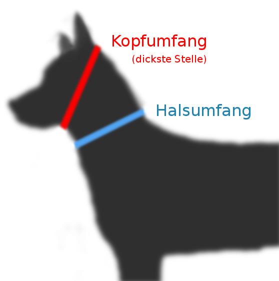 Kopfumfang Halsumfang des Hundes