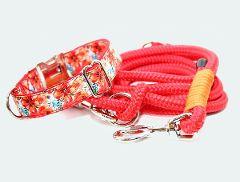 Hundehalsband-Tauhundeleine-Set