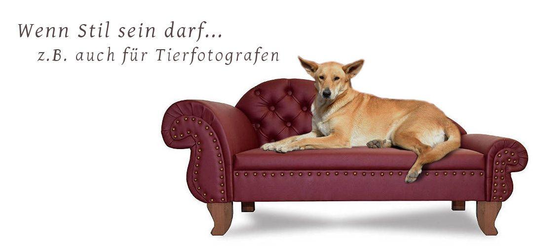 Luxus Designer Hundesofa Hundebett Hundecouch Hundesessel Kunstleder Chesterfield Hundefotograf Zubehör