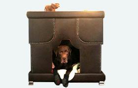 Designer-Luxus-Hundesofa