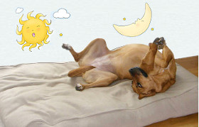 Sehr gesunde Hundekissen Schlafplätze