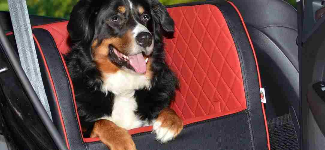 Autohundebetten für die Rückbank