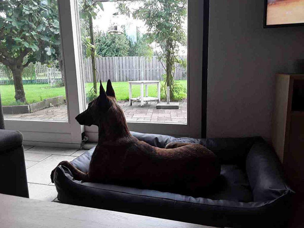 Kundenbild Dogsfavorite Hundebett