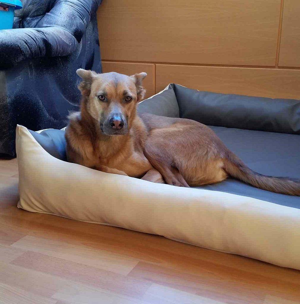 Miley und ihr neues Hundebett Kunstleder XXL Creme/Taupe Visco