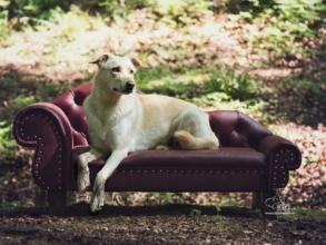 Designer Hundesofa Preiswolf24