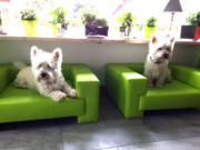 Hundesofa Boston Kunstleder Kundenbild