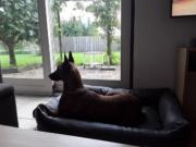Kundenbild-Dogsfavorite-Hundebett