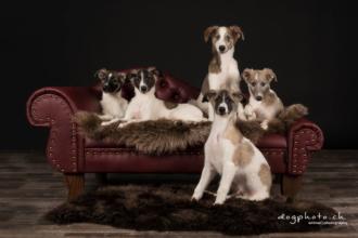 Kundenfoto-Hundecouch