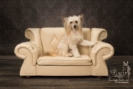 Luxus Designer Hundesofa Hundecouch