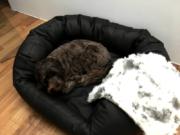 Robustes Hundebett Select-Plus-Kunstleder