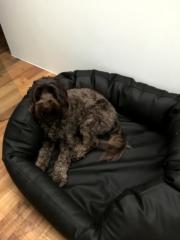 Robustes Hundebett Select Plus Kunstleder