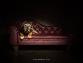 Luxus Designer Hundesofa Kundenbild