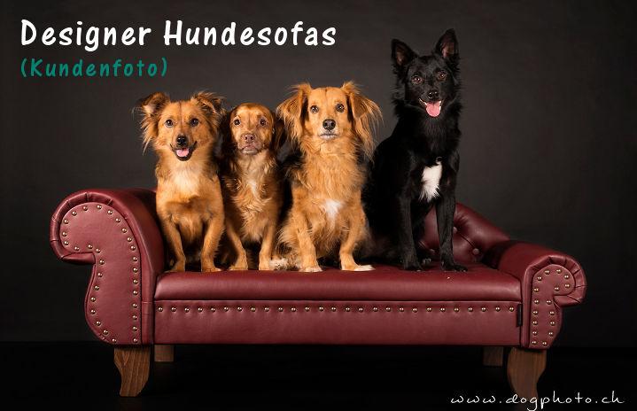 EDYDESIGN Luxus Designer Hundesofas Hundecouch Hundesessel Preiswolf24