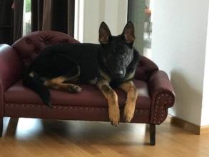 Hundebett-Hundesofa-ausgefallen