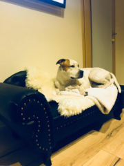 Hundecouch Recamiere