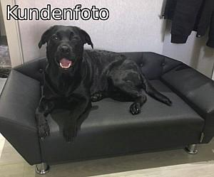 Hundesofa Hundecouch Kundenfoto